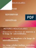 MOTORES MOLECULARES