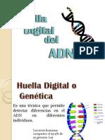 Huella Digital Del ADN