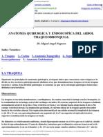 SEGMEMTOS TORAX
