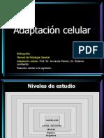 01. Adaptación celular