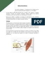 Reflejos Osteotendinosos