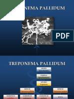 24 Treponema Pallidum