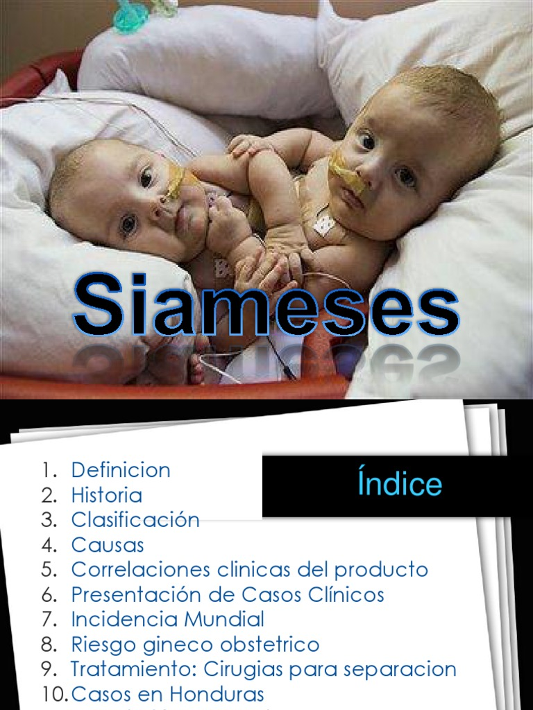 siameses 2
