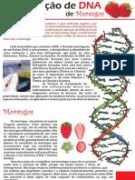extração DNA do morango