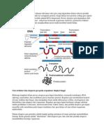 Ekspresi Gen Adalah Proses Dimana Informasi Dari Gen Yang Digunakan Dalam Sintesis Produk Gen Fungsional