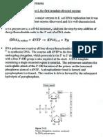 BIO2000 DNA Replication Ppt