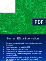 Lecture for Graduate Students 2004 Stem Cell Protocols 2