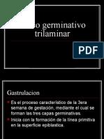 Disco Germinativo Tri Laminar