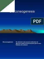 Gluconeogenesis Metabolismo Del Glucogeno