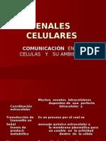 SENALES   CELULARES