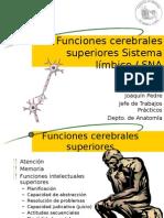 Límbico - Autónomo - Funciones Superiores