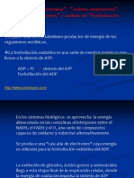 FOSFORILACI+ôN OXIDATIVA