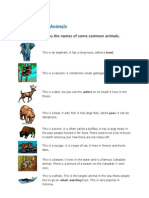 Common Animals
