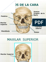 Huesos de La Cara 1 2 3 Como Profe