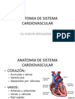 Anatomia de Sistema Cardiovascular