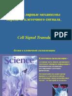 Signal Transduc1-Univ 2006 - Comp