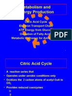 Energy Production and Electron Transport