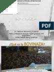 ~Bovinaza~