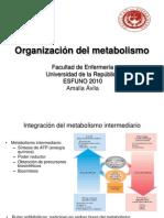 4 Teorico Organizacion Del Metabolismo Clase 4