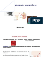 3 RENAL- Filtración glomerular
