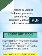 Estructura de Ácidos Nucleicos