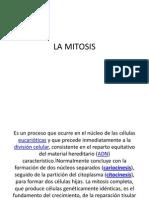 La Mitosis
