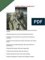 Diferenças entre lobos e pastores
