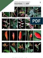 174 Peru Heliconias v1.1