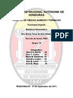 toxonomia vegetal. Grupo 10
