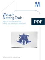 Western Blotting Tools Brochure