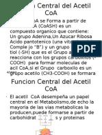 Funcion Central Del Acetil CoA