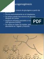 Glucogenogénesis