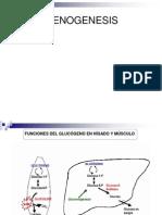 Metabolismo Del Glicogeno y via de Las Pentosas