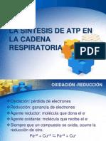 Sint Atp en La Cadena Resp y Fosf Oxidat