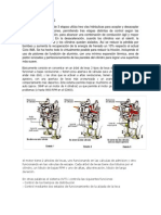 sincronizacion de motores
