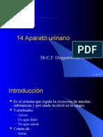 Clase Aparato Urinario Histología