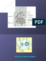Clase Retículo Endoplásmico Biología Celular