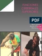 FUNCIONES CEREBRALES SUPERIORES 1