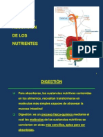 Absorcion y Digestion FINAL