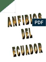 Anfibios Del Ecuador