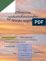 Diferencias anatomofuncionales entre niño y adulto