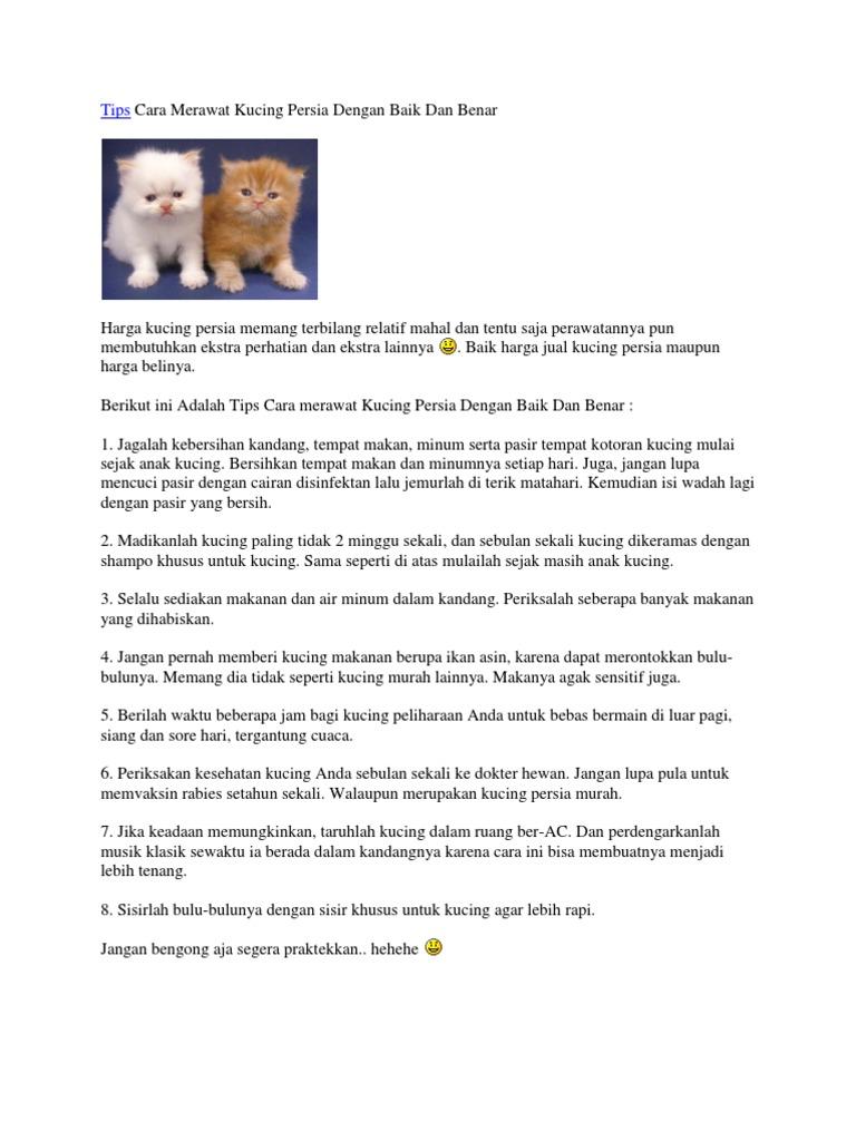 Tips Cara Merawat Kucing Persia Dengan Baik Dan Benar