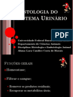 Histologia do Sistema Urinário