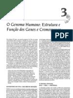 3_-_O_Genoma_Humano_Estrutura_e_Função_dos_Genes_e_Cromossomos