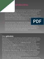 sistemaendocrino-090312195614-phpapp02