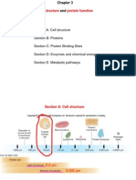 Ch3- Cell Structure and Protein Function