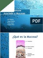 S. Inmune Asociado a Mucosas