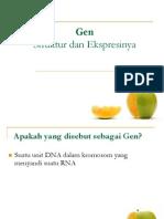Struktur Gen Dan Ekspresinya