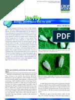 White Flies Paper 2