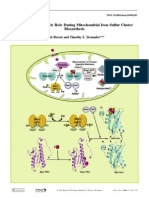 2011_Key Players and Their Role During Mitochondrial Iron–Sulfur Cluster